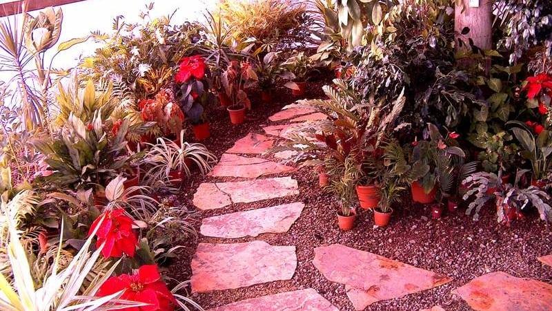 חממת צמחי בית - משתלת אגרו-נוי