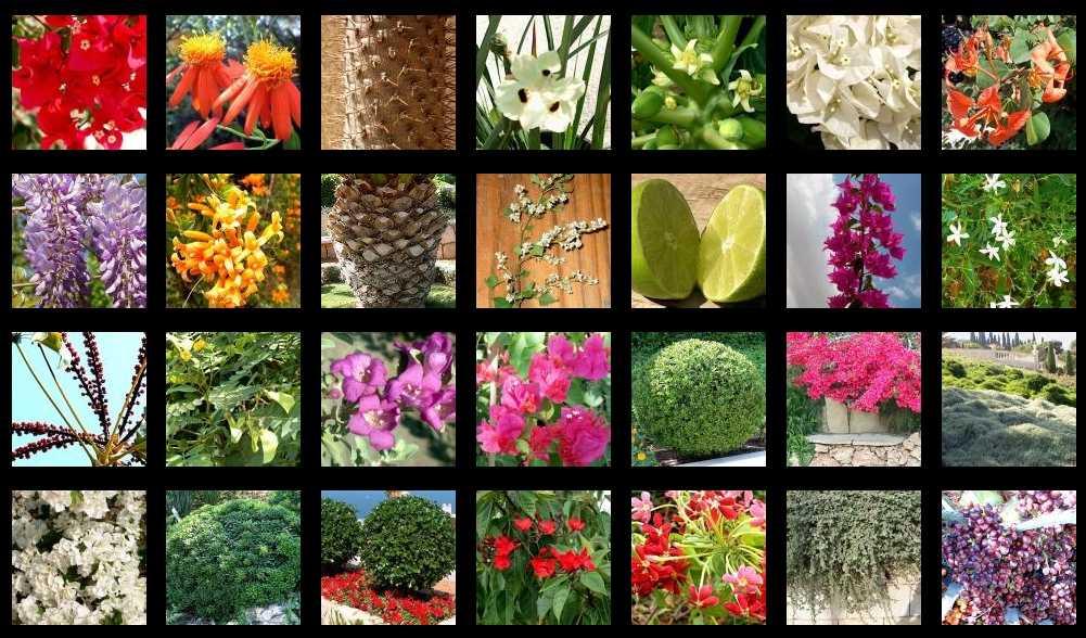 צמחי גן 3