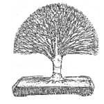 סגנונות עיצוב בונסאי 35