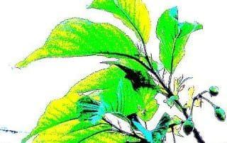 צמחים 1