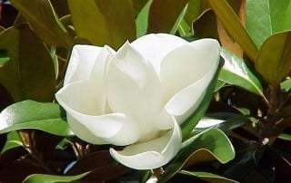 צמחים 2