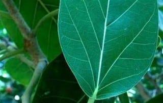 צמחים 3