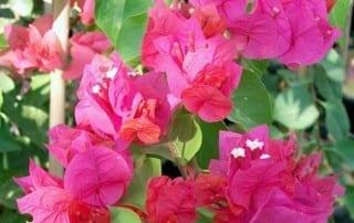 צמחים 4
