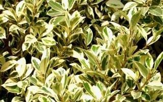 צמחים 6