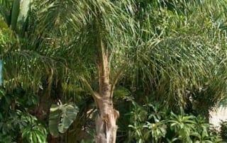צמחים 11