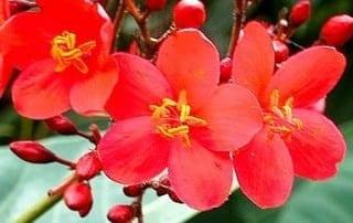 צמחים 13