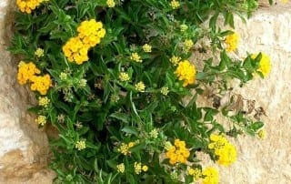 צמחים 16