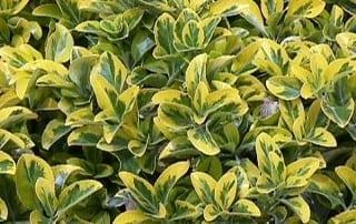 צמחים 18
