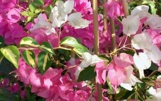 צמחים 19