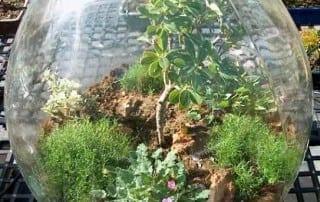 צמחים 21