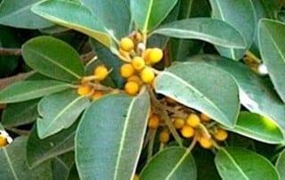 צמחים 24