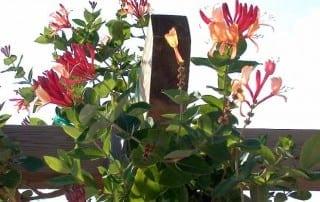 צמחים 26
