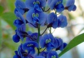 צמחים 295