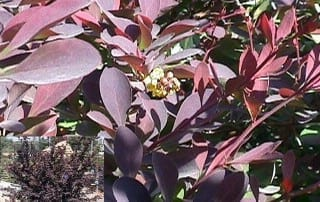 צמחים 29