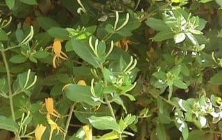צמחים 30