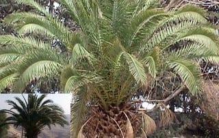צמחים 31