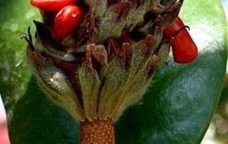 צמחים 34