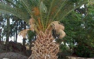 צמחים 37