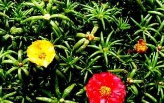 צמחים 38