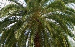 צמחים 39