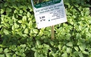 צמחים 43