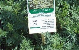 צמחים 44