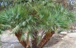 צמחים 48