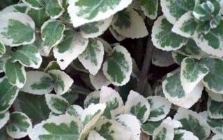 צמחים 53