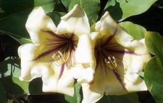 צמחים 54