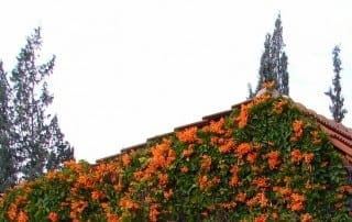 צמחים 55