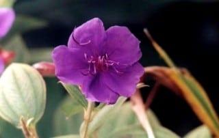 צמחים 56
