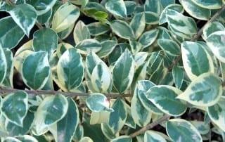 צמחים 60