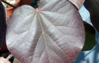 צמחים 61