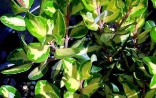 צמחים 64