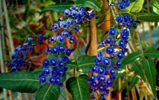 צמחים 65