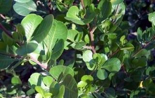 צמחים 68