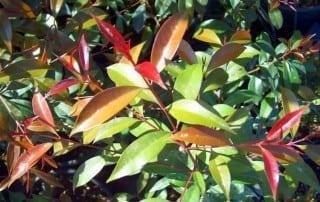 צמחים 70