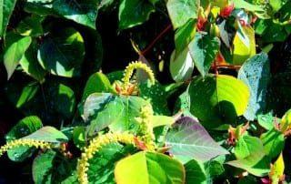 צמחים 73