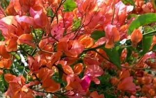 צמחים 74
