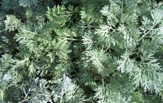 צמחים 78