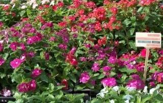 צמחים 79