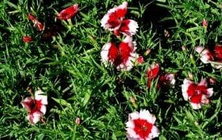 צמחים 81