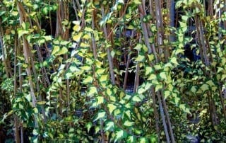 צמחים 83