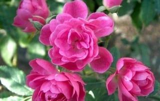 צמחים 84