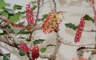 צמחים 86