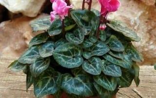 צמחים 92
