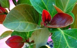 צמחים 94