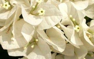 צמחים 102