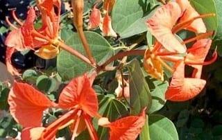 צמחים 103