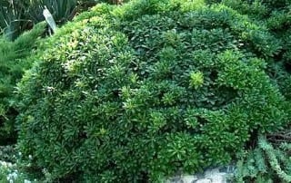 צמחים 104